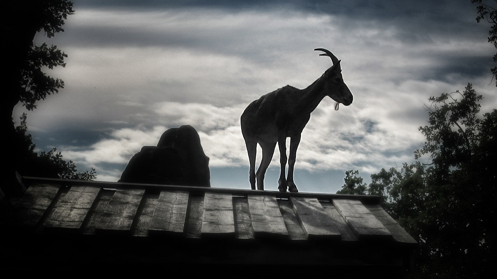A goat in silhouette