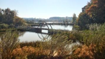 A small bridge in Ree Park